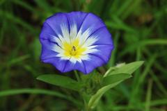 Flower (Hugo von Schreck) Tags: hugovonschreck outdoor flower blume blte macro makro canoneos5dsr tamron28300mmf3563divcpzda010 onlythebestofnature