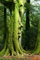 faccia d'albero (alessyak) Tags: wood amazing uman albero faccia face francia natura france nature tree magico magic antropomorfo silenzio silence tranquillita