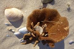 Saturday at Windang beach (Celeste33) Tags: sponge beach sand