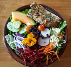 DSC_9224 (devoutly_evasive) Tags: salad angrytroutcafe lettuce radish edibleflower blossom bloom grilled fish herring cisco carrot beets wildblueberries grandmarais mn minnesota restaurant cafe lunch plate fruit beautiful gorgeous purplecarrot nasturtium