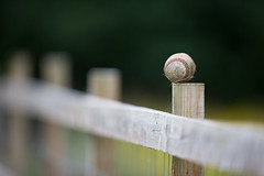 On The Fence (Pittypomm) Tags: fence baseball