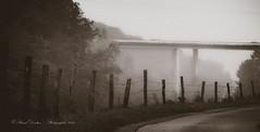 Road to an Old Futur (Pascal Dentan) Tags: futur vieux old fens barrire bois wood piquet forest arbre pont bridge road chemin tree cloud ciel extrieur monochrome nice tone white black switzerland schweiz suisse romandie vaud bavois 2016 photographie