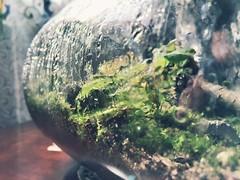 Terrarium (nikitalesnik) Tags: phone iphone6 iphone terrarium light jar condensation water plants ecosystem nature