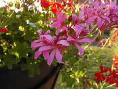 2016-08-14-6664 (vale 83) Tags: flowers nokia n8 friends colourartaward
