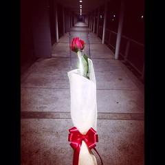 """""""ดอกกุหลาบสีแดง"""" ที่รายล้อมไปด้วย """"ความเหงา"""""""