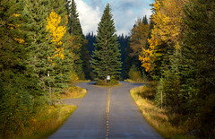 Unaccommodating (A.B.B) Tags: canada banffnationalpark bowvalleyparkway