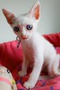 Mini Dumbo :3 (. Ree .) Tags: cat canon flickr gato fotos filhote sl1 gatobranco