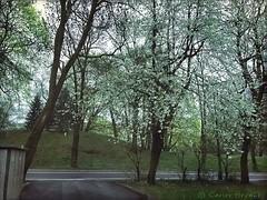Inkognitogata Spring (C.Bry@nt) Tags: street tree primavera apple true oslo norway arbol norge calle spring gate gata noruega nordic frogner akershus scandinavian iphone norsk norske skandinavia