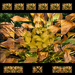 jdy307 Bgr3Egr bad ead Blo RbgbYard Elo bpl Fall colors eplXX20041101a1069.jpg thumbnail