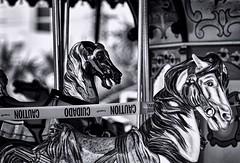 Caution (Rebecca Thomas of North Carolina (!)) Tags: carousel merrygoround carouselhorse myrtlebeachsc