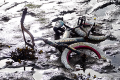 Trooper (Dom Walton) Tags: trooper abandoned bike bicycle junk mud tipner domwalton