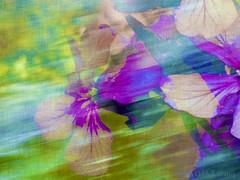 Wind flowers (Elisafox22 catching up again ;o)) Tags: flowers blue green photomanipulation photoshop design petals movement purple wind patterns challenge photomanipulated postprocessing ipad kreativepeople elisafox22 elisaliddell©2015 treatthis78