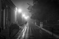Una pareja en la niebla (Javier Martinez de la Ossa) Tags: bw espaa blancoynegro blackwhite calle sevilla spain bn niebla empedrado barriodesantacruz jardinesdemurillo platinumheartaward nikond700 nikkor2470 javiermartinezdelaossa flickrbronzetrophygroup
