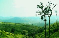 bandorban (Ashraful Tareq) Tags: sky tree green hill ash dhaka tareq mymensingh ashraful bandarbon