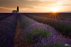 _MG_0985 copie (Pcphoto56350) Tags: valensole beboy sunset sunrise lavande plateau soleil