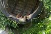 Upside down nap time (vic_sf49) Tags: vicsf49 uk england dorset monkeyworld cronin