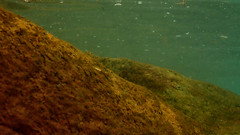 Batu Batu Resort (phalinn) Tags: batu tengah babi island pulau resort trevally dart spotted shark ikan jerung black tip family outdoor underwater olympus tg4 dive swim fun explore hotel malaysia johor jdt takzim mersing asia wanderlust holiday travel tour photography relax jalan cuti fish beach sea ocean laut pantai snorkel snorkeling damsel damselfish snapper ehrenberg parrot coral reef sergeant major goatfish parrotfish pompano 1mdb