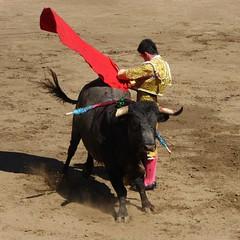 Guillermo Valencia (aficion2012) Tags: ceret 2016 novillada corrida toros bulls bull fight novillos france francia d mario y hros de manuel vinhas torero matador novillero estatuario guillermo valencia