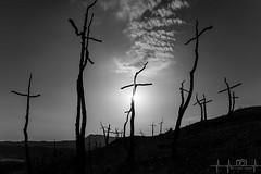 Bosc de les Creus 2 (borjamuro) Tags: creu cruz cross bosque bosc forest fire incendio incendi fuego foc marc bombero fireguard fireman barcelona montserrat espana espaa espanya catalunya cataluna catalua catalonia nikon d7100 7100 bn bw