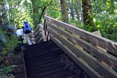 An Easy Walk up the Valley (Sotosoroto) Tags: dayhike hikingwashington coalcreek stairs bellevue newporthills