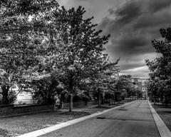 University of South Carolina Campus Road (that_damn_duck) Tags: blackandwhite monochrome outdoor universityofsouthcarolina usc trees clouds college campus bw blackwhite