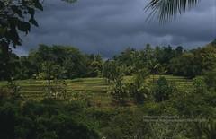 Bali, Ubud, rice fields (blauepics) Tags: indonesien indonesia indonesian indonesische bali island ubud trees bume natur landscape landschaft reisfelder rice reis fields terraces terrassen clouds wolken green grn agriculture landwirtschaft contrasts kontraste