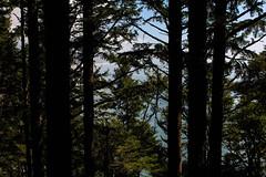 oregon (37 of 147) (SPLTImage Inc.) Tags: oregon trip travel vacation waterfalls ecola coast westcoast nature naturephotography