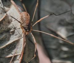 DSC_6484 (Paul Rayney) Tags: arachnid 8legs critter wildlife nature nikond7100sigma105