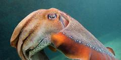 Merimbula Aquarium NSW (nictink) Tags: eden nsw landscapewater seasideseaocean sunrises boats nationalparks tranquil calming peaceful blue water ocean rocks cliffs bay twofoldbay