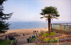 Winter Fog On The Beach (Clayton Perry Photoworks) Tags: winter canada beach fog vancouver bc palmtree stanleypark thirdbeach explorebc explorecanada