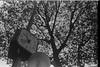 Paris Nov14 (nauj [1972]) Tags: paris werlisa analógico