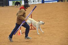 agility247 (jaimekay16) Tags: dog training austin agility k9 xpress nadac k9x