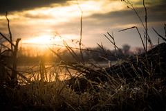 Dawn (Microcell) Tags: morning lake grass sunrise dawn log weeds glow