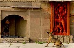 Shiv Ling - Hanuman - Bhairav (Well-Bred Kannan (WBK Photography)) Tags: travel india tourism up nikon god indian varanasi hanuman hindu hinduism ganges ghats banaras kannan wellbred nikond3200 uttarpradesh wbk shivling bhairav weekendwalk d3200 banarasi ghatsofvaranasi streetofvaranasi wbkphotography kannanmuthuraman bharavar