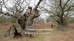 P1280282 (2)Stunning Bradgate Park amazing trees (thetreehunter) Tags: trees tree forest woodland oak ancient woodlands shropshire leicestershire ash yew beech pollard ath atf bradgatepark coppice bradgate ellesmere ancienttrees robmcbride thetreehunter ancienttreeforum