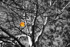 Herbstwanderung023neu2
