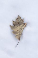 Leaf (mikemcnary) Tags: winter snow cold ice weather dead frozen leaf kentucky freezing indiana fallen louisville jeffersonville fallsoftheohio