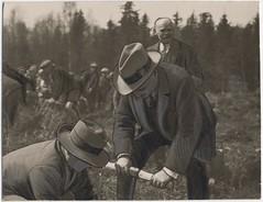 Anglų lietuvių žodynas. Žodis afforest reiškia v apsodinti miškais lietuviškai.