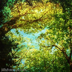 Happy Earth Day! (jillsfotoluv) Tags: trees painterly nature leaves spring branches artsy trunk richmondvirginia earthday