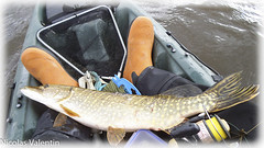 Addicted to fishing (Nicolas Valentin) Tags: scotland fishing scottish pike ecosse pikefishing kayakfishing oceankayak kayakpike
