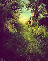 'Backyard Jungle' #photography #PhotoManipulated #Guam #GraphicDesign #DigitalIllustration #UsagigunnDesignInx #SarahsArt #SarahMaurer #surrealism #fantasy #Pacific #IslandLife #Ranch #butterflies #jungle #Sunset #Sunlight #dream #Nature #imagination (Usagigunn79) Tags: ranch sunset sunlight nature photography graphicdesign pacific surrealism dream butterflies fantasy jungle imagination guam photomanipulated islandlife digitalillustration sarahsart sarahmaurer usagigunndesigninx
