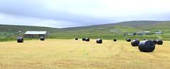 Baled Up (falkirkbairn) Tags: bales shetland sandwick