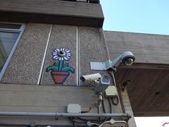 Flower disguise (moley75) Tags: flower london mosaic cctv southbank pot securitycameras centrallondon bfi