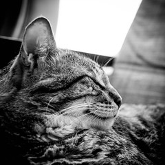 Monty (stickyfiddle) Tags: cat pet kitten fur furry fluff paws portrait animal fuji xt1