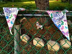 parabéns... (bruce grant) Tags: cerca rededearame bandeirinhas estatua cão cachorro