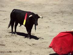 el cite (aficion2012) Tags: ceret 2016 novillada corrida toros bulls bull fight novillos france francia d mario y hros de manuel vinhas torero matador novillero