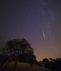 Livermore Rain [Explore 8/12/2016] (Steven Christenson) Tags: livermore california perseid meteor tree lightpollution