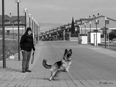 CARRERA ANIMAL... 2015 (Alberto Fer.) Tags: carrera animal perro dog can nikon 5100 enero invierno jugar jugando blancoynegro monocromatico aire libre bn