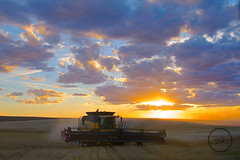 Sunset harvest (breann.fischer) Tags: combine greatplains northdakota farmer farming newholland wheat nd2016contest
