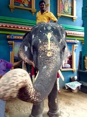 Manakula Vinayagar Temple Pondicherry. (GilleSabine1) Tags: inde pondicherry puducherry elephant temple hindouisme hindou tamil nadu